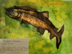 Painting of a lake trout by a middle school student